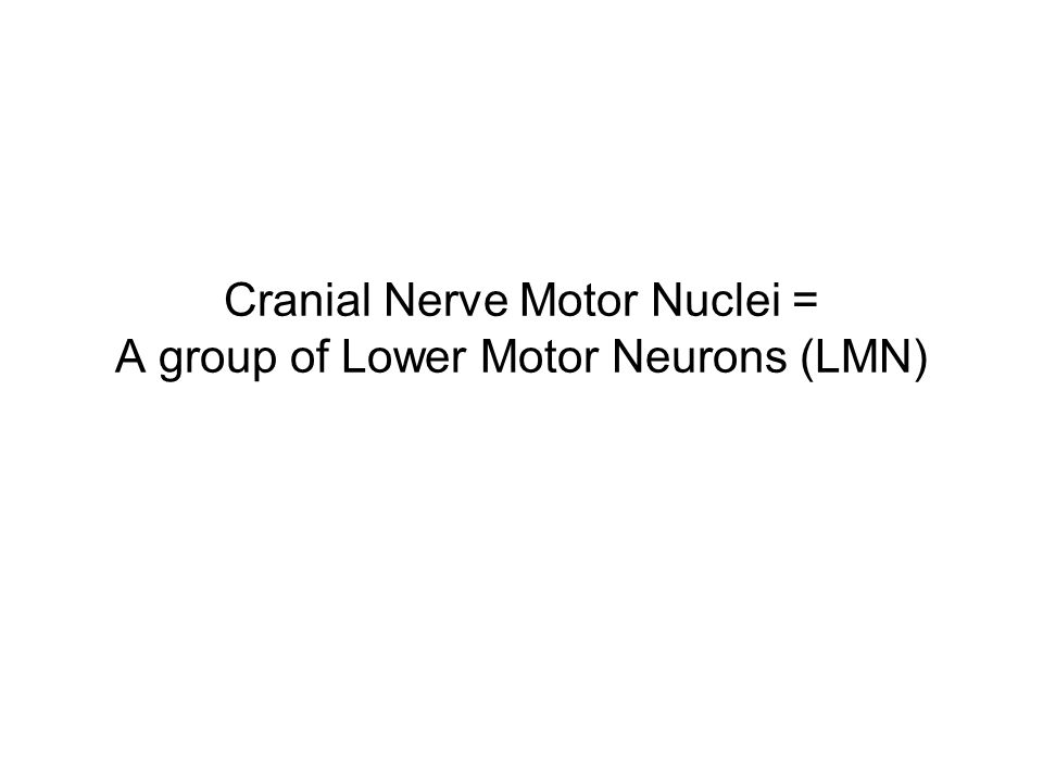 Cranial Nerve Motor Nuclei = A group of Lower Motor Neurons (LMN)