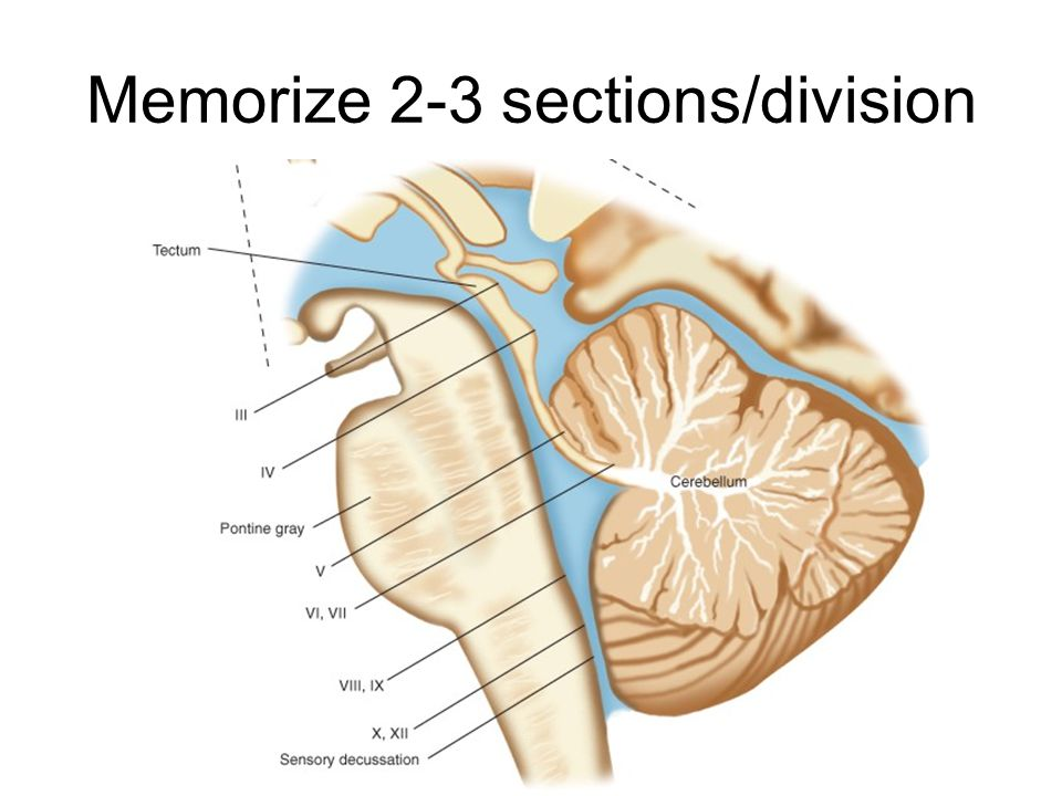 Memorize 2-3 sections/division