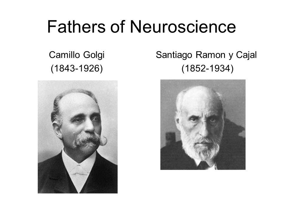 Fathers of Neuroscience Camillo Golgi (1843-1926) Santiago Ramon y Cajal (1852-1934)