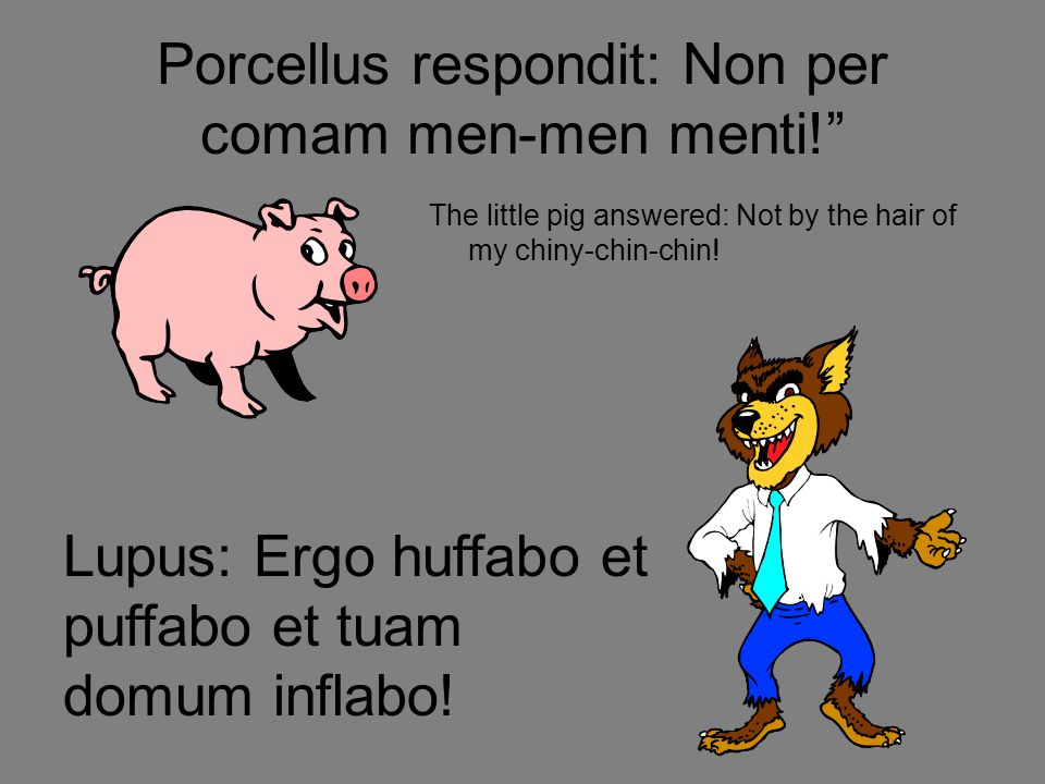 Porcellus respondit: Non per comam men-men menti! The little pig answered: Not by the hair of my chiny-chin-chin.