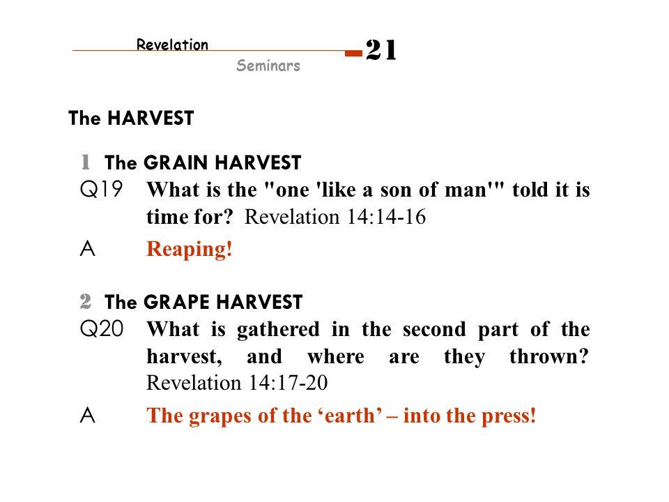 Revelation Seminars 21 The HARVEST 1 The GRAIN HARVEST Q19 What is the