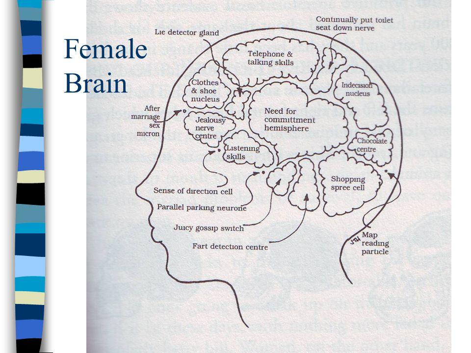 Female Brain