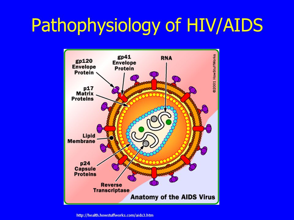 Pathophysiology of HIV/AIDS http://health.howstuffworks.com/aids3.htm