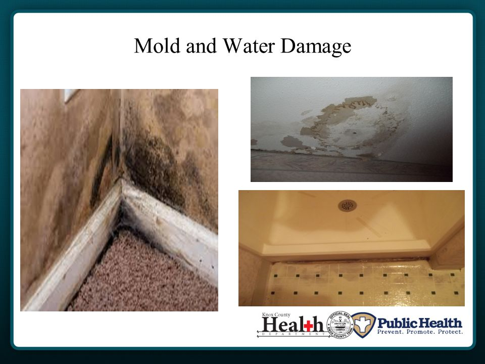 Mold and Water Damage