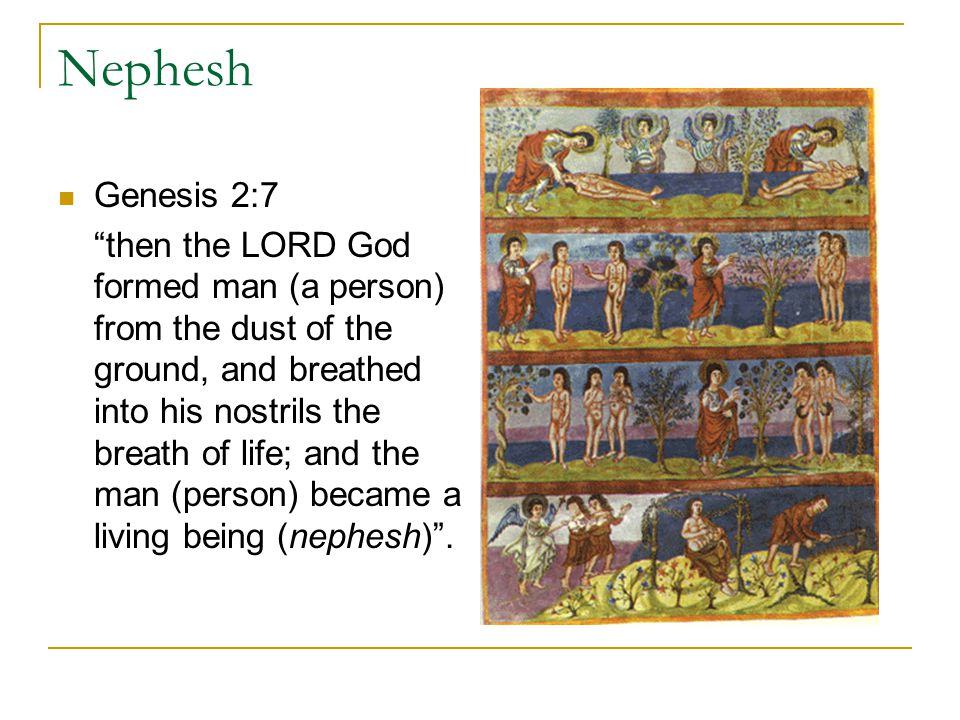 Nephesh Genesis 2:7 then the LORD God formed man (a person) from the dust of the ground, and breathed into his nostrils the breath of life; and the man (person) became a living being (nephesh) .