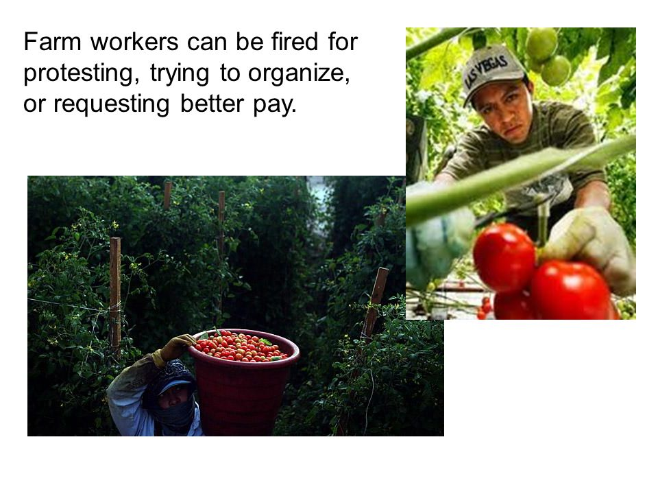 Farm workers can be fired for protesting, trying to organize, or requesting better pay.