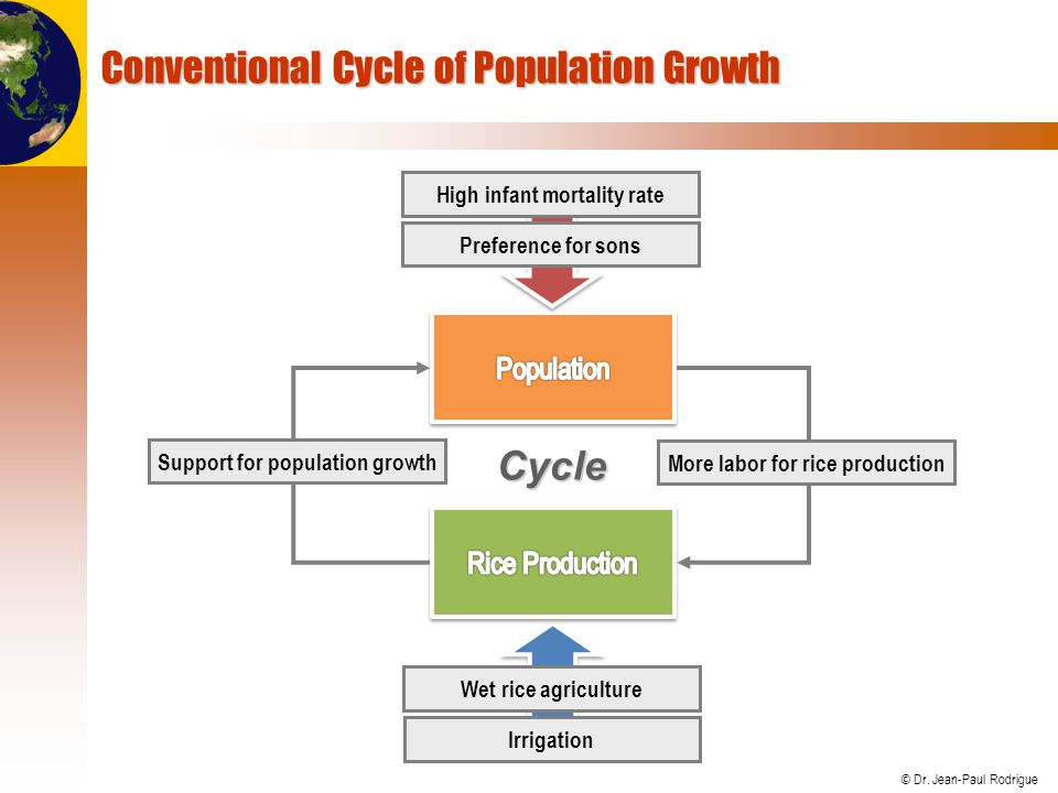 © Dr. Jean-Paul Rodrigue Conventional Cycle of Population Growth More labor for rice production Support for population growth Wet rice agriculture Irr