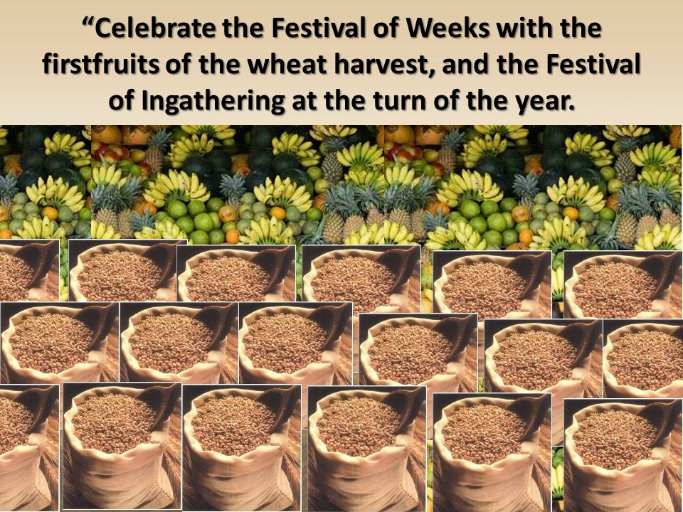 Celebrate the Festival of Weeks with the firstfruits of the wheat harvest, and the Festival of Ingathering at the turn of the year.