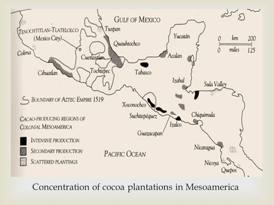  Concentration of cocoa plantations in Mesoamerica