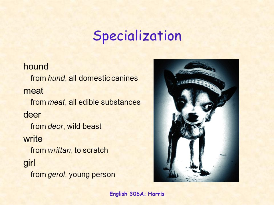 English 306A; Harris Specialization hound from hund, all domestic canines meat from meat, all edible substances deer from deor, wild beast write from writtan, to scratch girl from gerol, young person