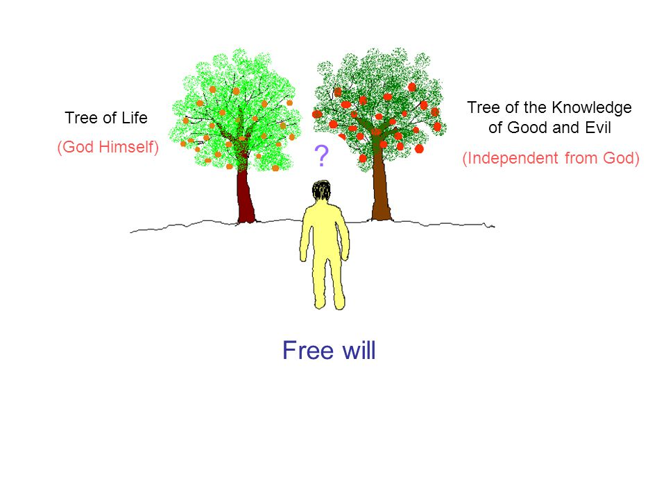 Free will ? Tree of Life Tree of the Knowledge of Good and Evil (God Himself) (Independent from God)