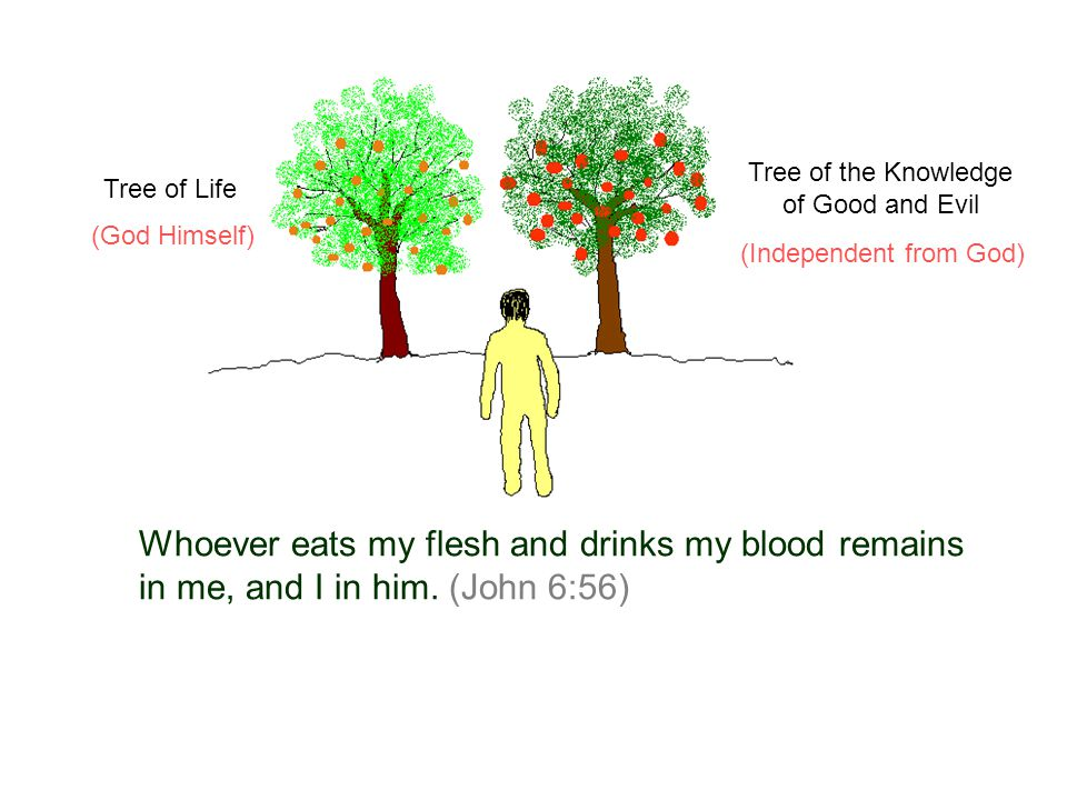 Whoever eats my flesh and drinks my blood remains in me, and I in him. (John 6:56) Tree of Life Tree of the Knowledge of Good and Evil (God Himself) (