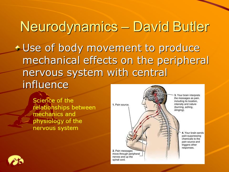 Neurodynamics – David Butler Use of body movement to produce mechanical effects on the peripheral nervous system with central influence Science of the relationships between mechanics and physiology of the nervous system