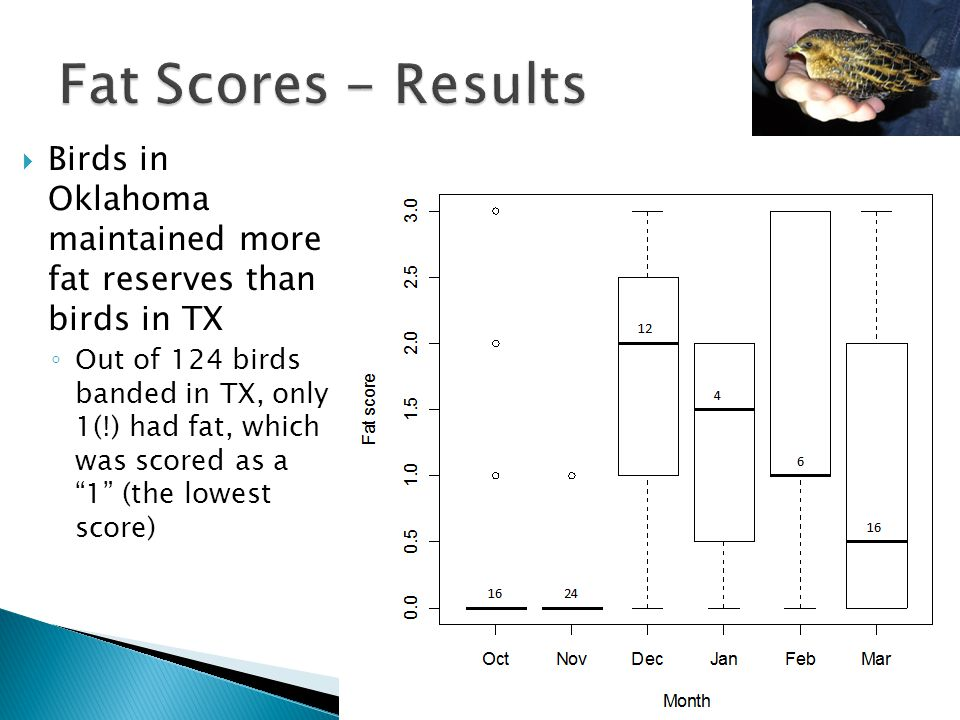 """ Birds in Oklahoma maintained more fat reserves than birds in TX ◦ Out of 124 birds banded in TX, only 1(!) had fat, which was scored as a """"1"""" (the l"""