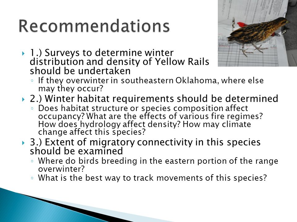  1.) Surveys to determine winter distribution and density of Yellow Rails should be undertaken ◦ If they overwinter in southeastern Oklahoma, where e