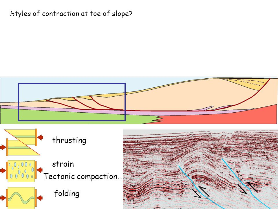 Styles of contraction at toe of slope thrusting folding strain Tectonic compaction ….