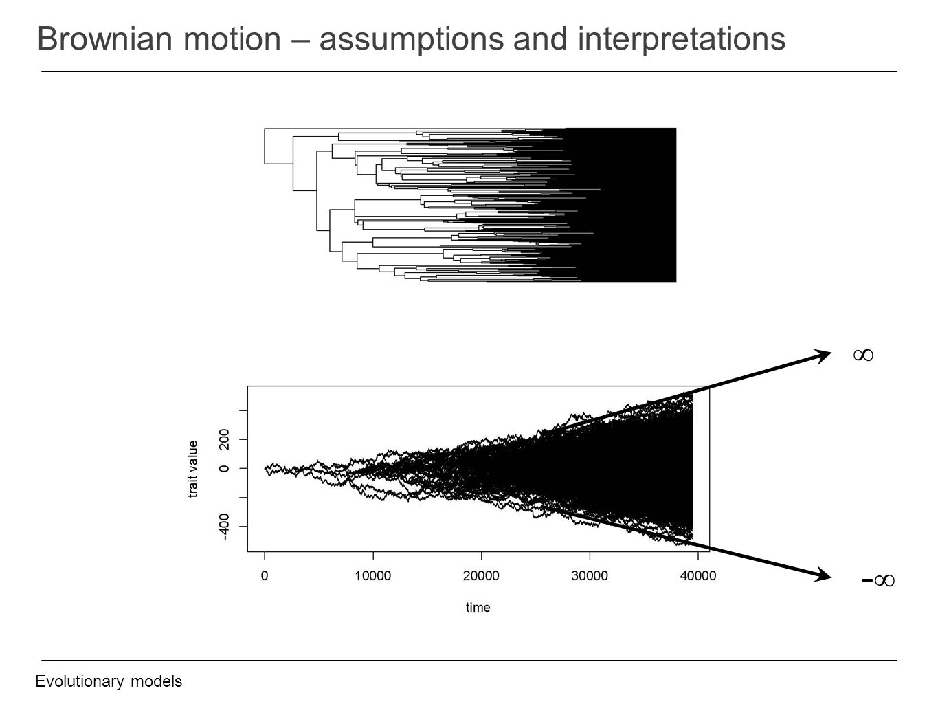 Brownian motion – assumptions and interpretations Evolutionary models ∞ -∞
