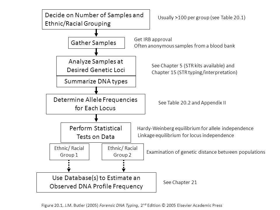 Decide on Number of Samples and Ethnic/Racial Grouping Gather Samples Get IRB approval Analyze Samples at Desired Genetic Loci Summarize DNA types Ethnic/ Racial Group 1 Ethnic/ Racial Group 2 Determine Allele Frequencies for Each Locus Perform Statistical Tests on Data Hardy-Weinberg equilibrium for allele independence Linkage equilibrium for locus independence Usually >100 per group (see Table 20.1) Use Database(s) to Estimate an Observed DNA Profile Frequency See Chapter 21 Often anonymous samples from a blood bank See Table 20.2 and Appendix II See Chapter 5 (STR kits available) and Chapter 15 (STR typing/interpretation) Examination of genetic distance between populations Figure 20.1, J.M.