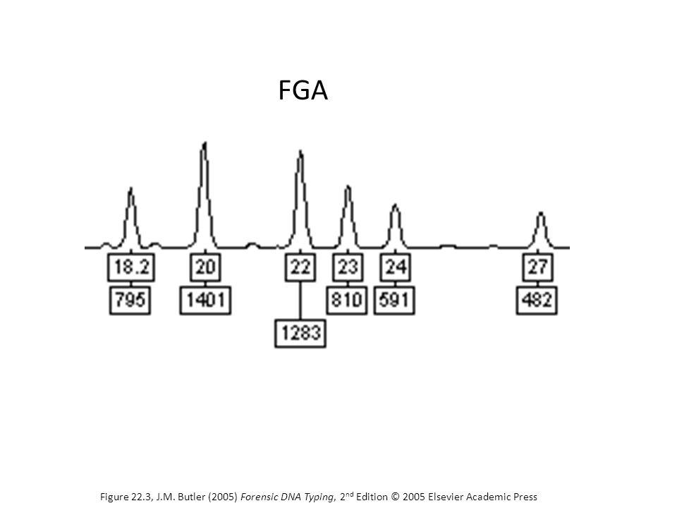 FGA Figure 22.3, J.M. Butler (2005) Forensic DNA Typing, 2 nd Edition © 2005 Elsevier Academic Press