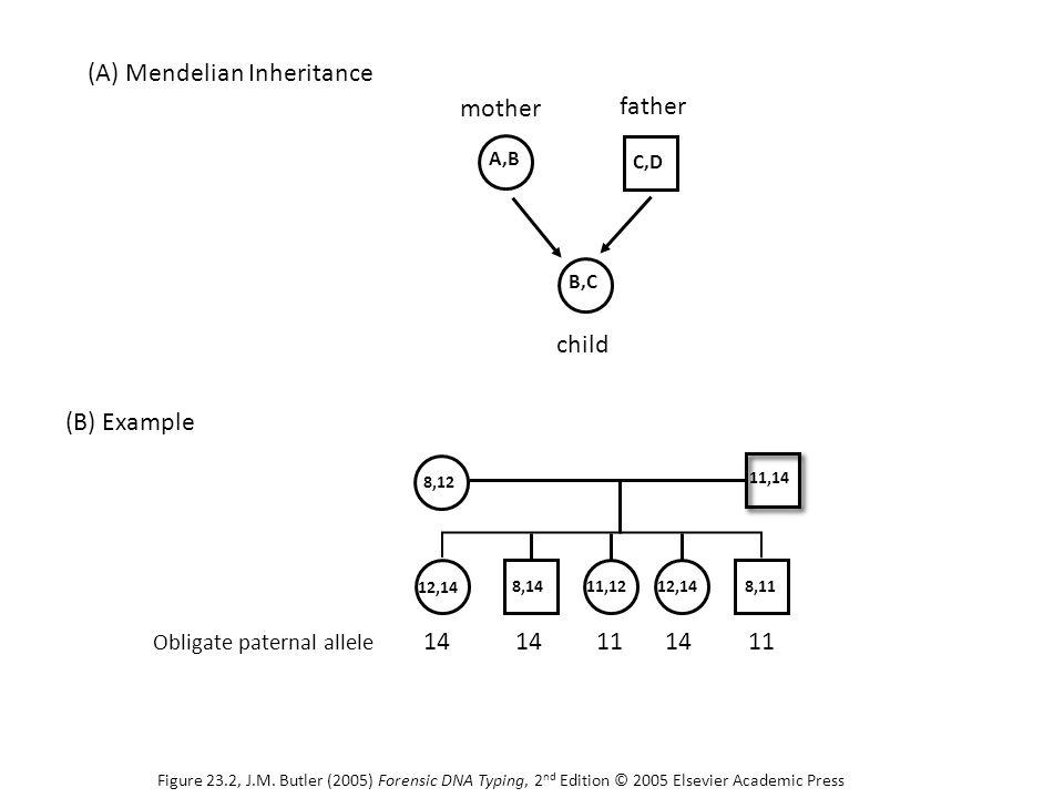 11,14 8,12 12,14 11,128,1412,148,11 Obligate paternal allele 14 111411 C,D A,B B,C mother father child (B) Example (A) Mendelian Inheritance Figure 23