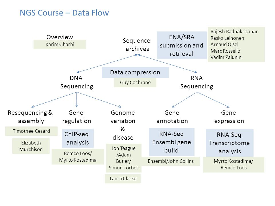 NGS Course – Data Flow DNA Sequencing RNA Sequencing Sequence archives ENA/SRA submission and retrieval Gene regulation ChIP-seq analysis Gene annotation RNA-Seq Ensembl gene build Gene expression RNA-Seq Transcriptome analysis Elizabeth Murchison Jon Teague /Adam Butler/ Simon Forbes Data compression Guy Cochrane Ensembl/John CollinsMyrto Kostadima/ Remco Loos Remco Loos/ Myrto Kostadima Rajesh Radhakrishnan Rasko Leinonen Arnaud Oisel Marc Rossello Vadim Zalunin Resequencing & assembly Timothee Cezard Laura Clarke Genome variation & disease Karim Gharbi Overview