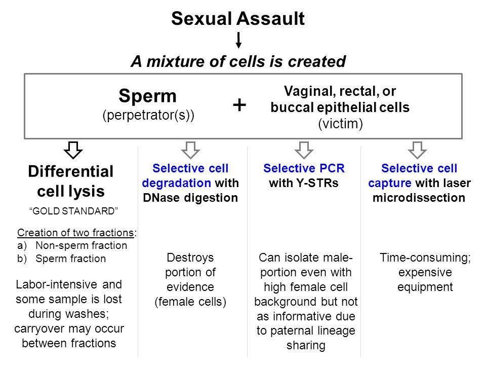 Sexual Assault A mixture of cells is created Sperm (perpetrator(s)) Vaginal, rectal, or buccal epithelial cells (victim) + Selective PCR with Y-STRs D