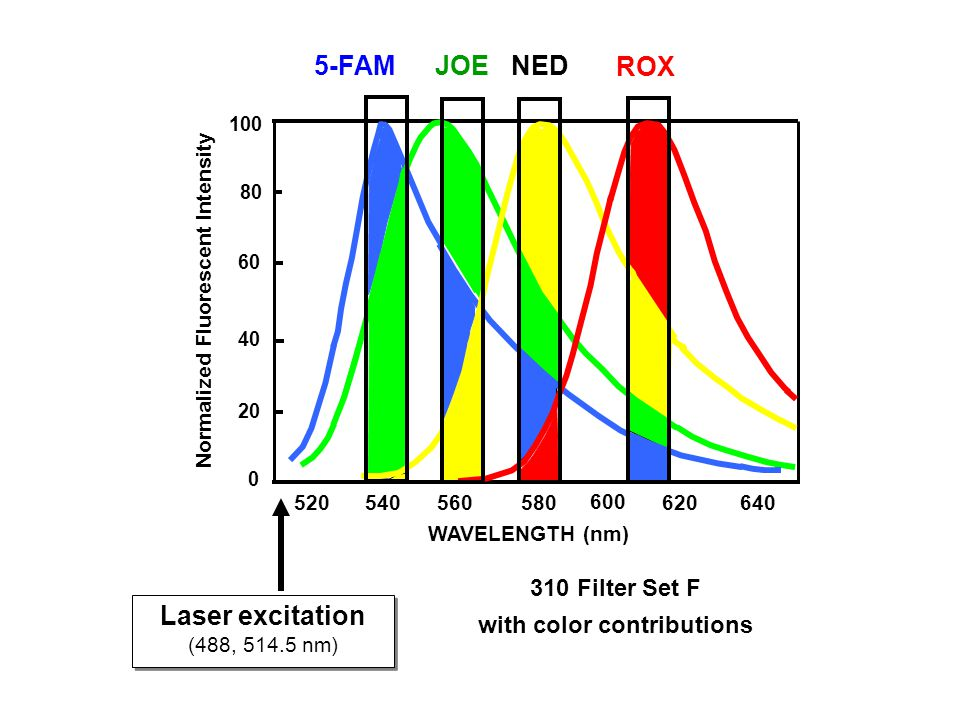 520540560580 600 620640 WAVELENGTH (nm) 100 80 60 40 20 0 310 Filter Set F with color contributions 5-FAMJOENED ROX Laser excitation (488, 514.5 nm) L