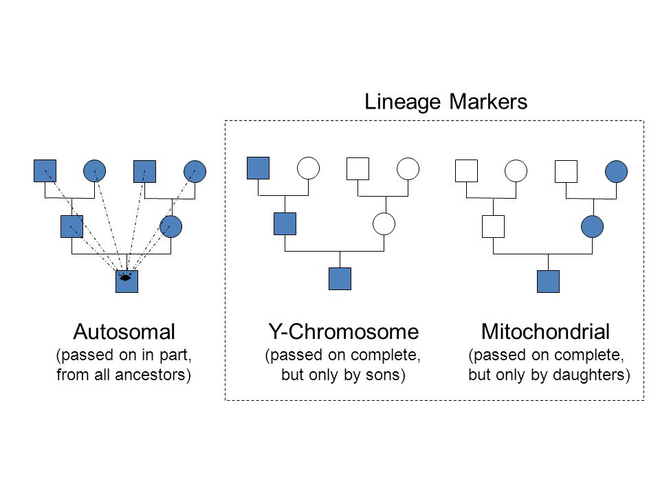 Autosomal (passed on in part, from all ancestors) Y-Chromosome (passed on complete, but only by sons) Mitochondrial (passed on complete, but only by d