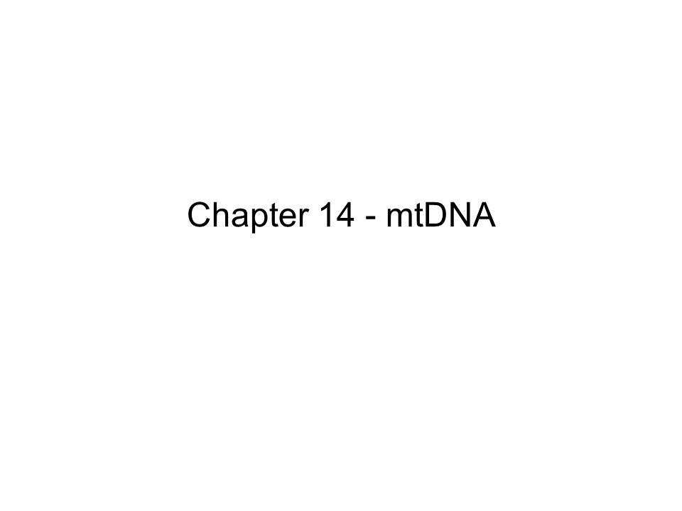Chapter 14 - mtDNA