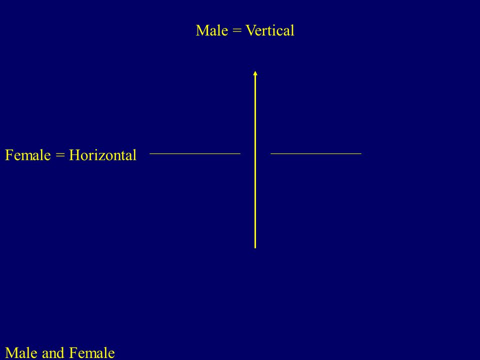Male and Female Male = Vertical Female = Horizontal