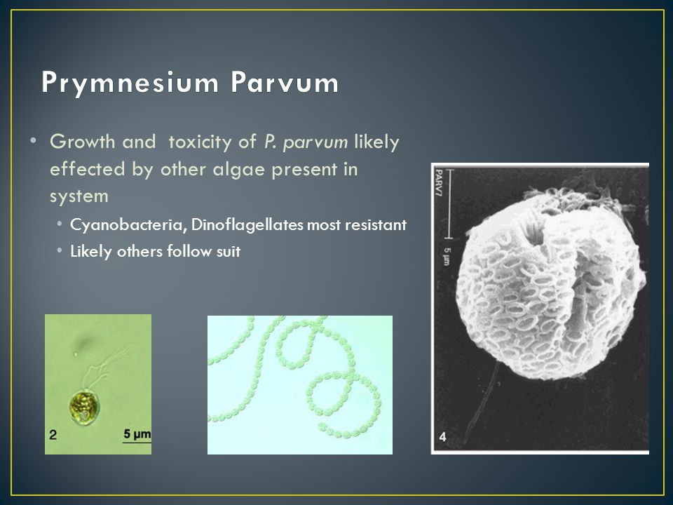 Growth and toxicity of P. parvum likely effected by other algae present in system Cyanobacteria, Dinoflagellates most resistant Likely others follow s
