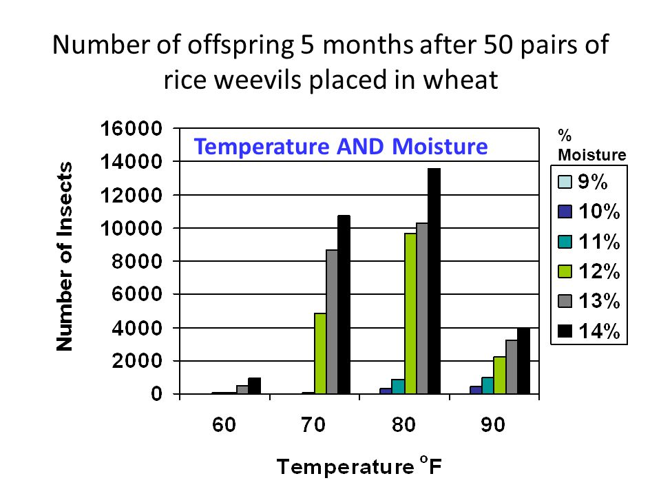 Number of offspring 5 months after 50 pairs of rice weevils placed in wheat % Moisture Temperature AND Moisture
