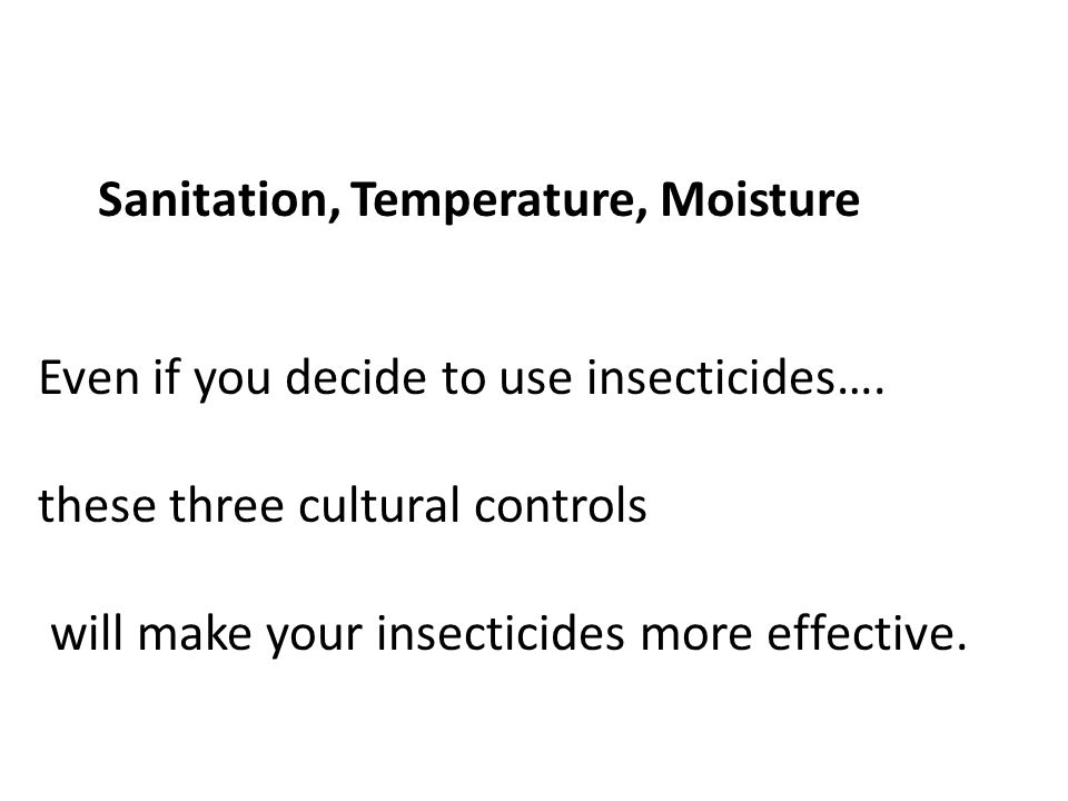 Sanitation, Temperature, Moisture Even if you decide to use insecticides….