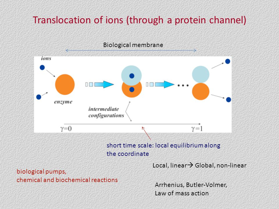 Translocation of ions (through a protein channel) short time scale: local equilibrium along the coordinate biological pumps, chemical and biochemical reactions Arrhenius, Butler-Volmer, Law of mass action Local, linear  Global, non-linear Biological membrane