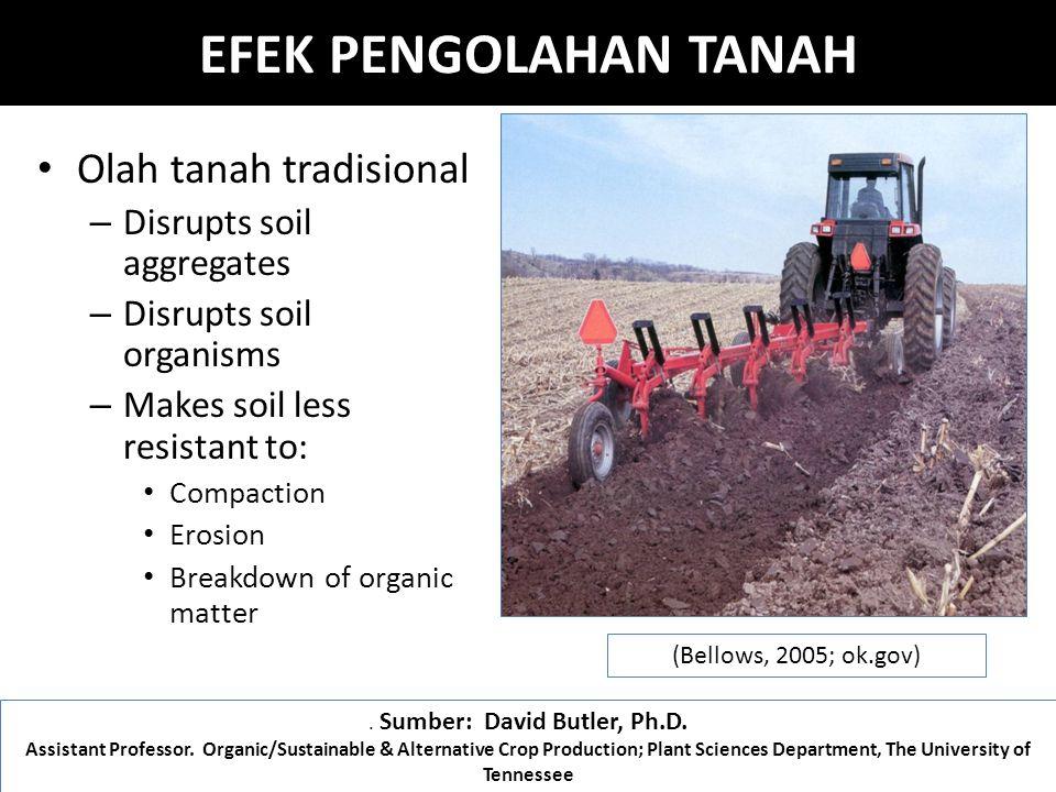 EFEK PENGOLAHAN TANAH Olah tanah tradisional – Disrupts soil aggregates – Disrupts soil organisms – Makes soil less resistant to: Compaction Erosion Breakdown of organic matter (Bellows, 2005; ok.gov).