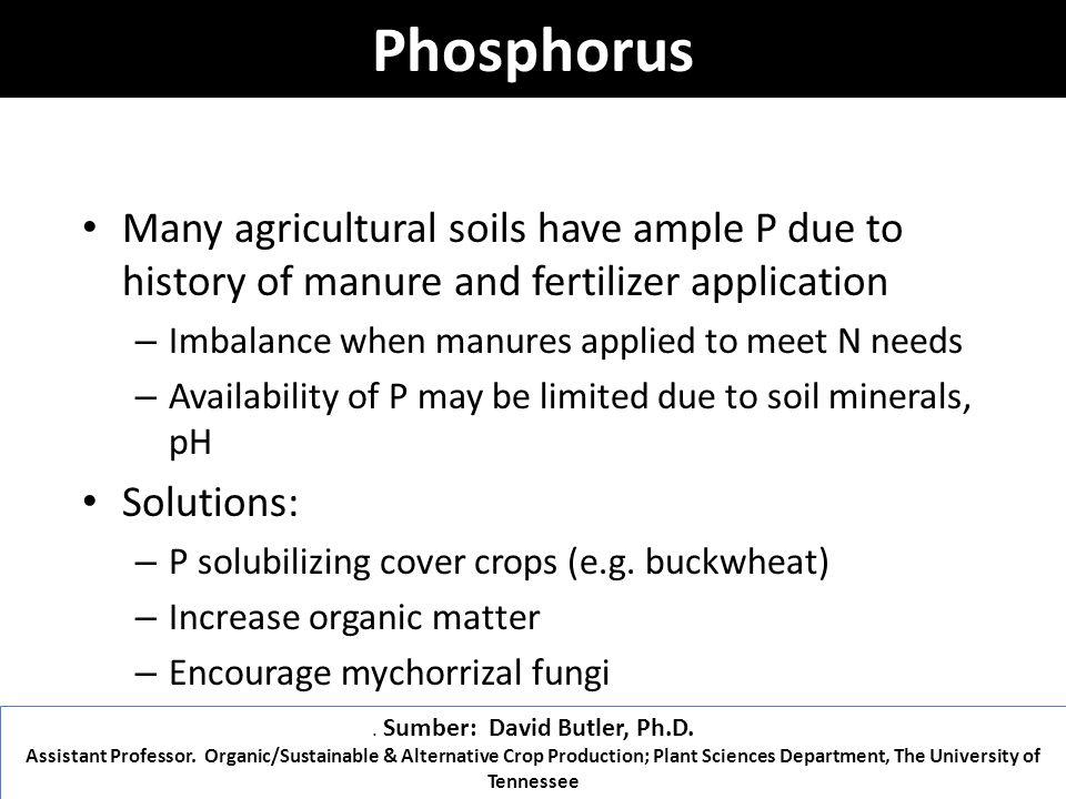 Phosphorus Many agricultural soils have ample P due to history of manure and fertilizer application – Imbalance when manures applied to meet N needs – Availability of P may be limited due to soil minerals, pH Solutions: – P solubilizing cover crops (e.g.
