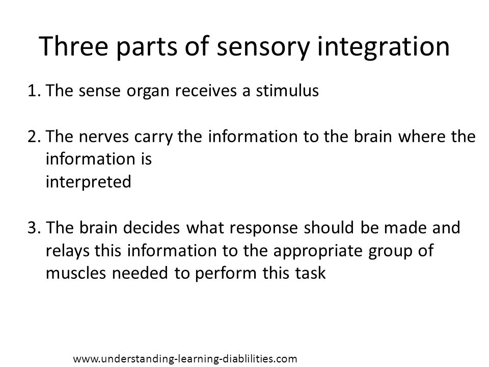 Three parts of sensory integration 1.The sense organ receives a stimulus 2.The nerves carry the information to the brain where the information is inte