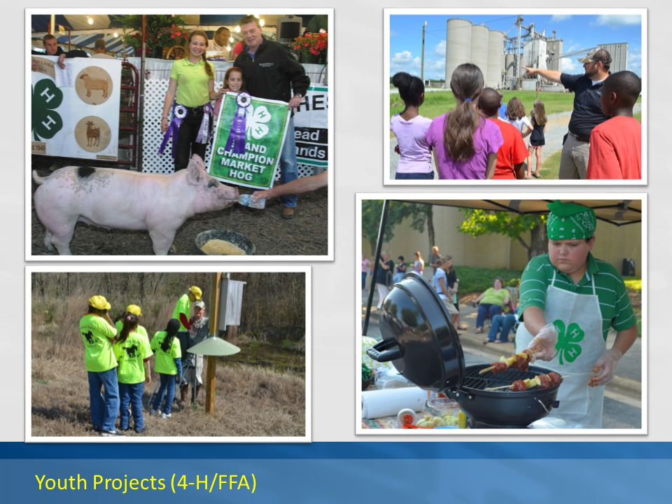 Youth Projects (4-H/FFA)