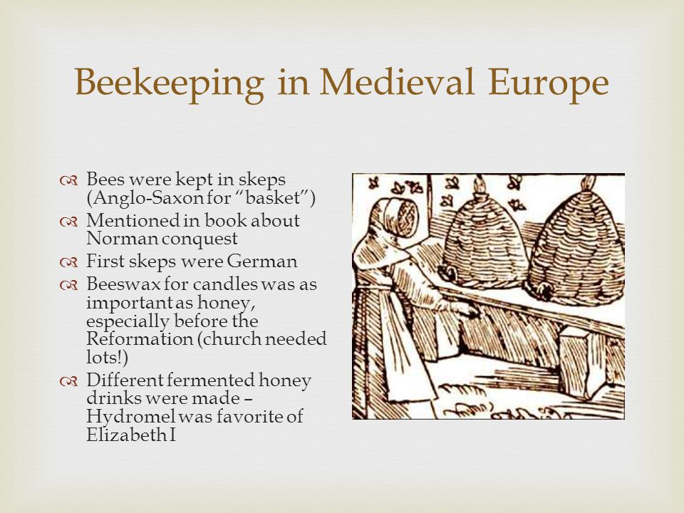 Beekeeping in Medieval Europe  Bees were kept in skeps (Anglo-Saxon for basket )  Mentioned in book about Norman conquest  First skeps were German  Beeswax for candles was as important as honey, especially before the Reformation (church needed lots!)  Different fermented honey drinks were made – Hydromel was favorite of Elizabeth I