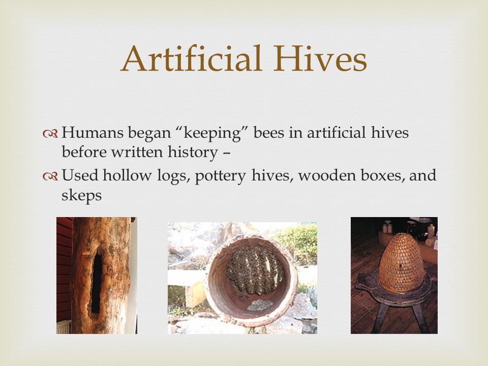 Humans began keeping bees in artificial hives before written history –  Used hollow logs, pottery hives, wooden boxes, and skeps Artificial Hives