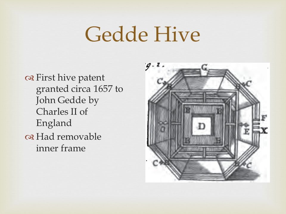 Gedde Hive  First hive patent granted circa 1657 to John Gedde by Charles II of England  Had removable inner frame
