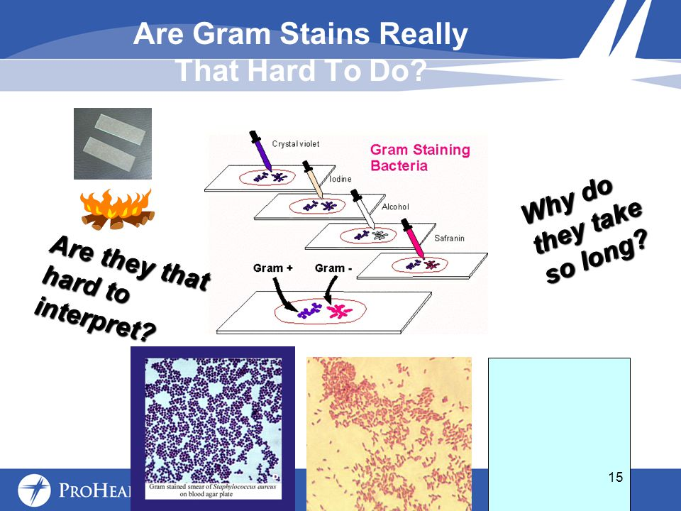 Are Gram Stains Really That Hard To Do. Why do they take so long.
