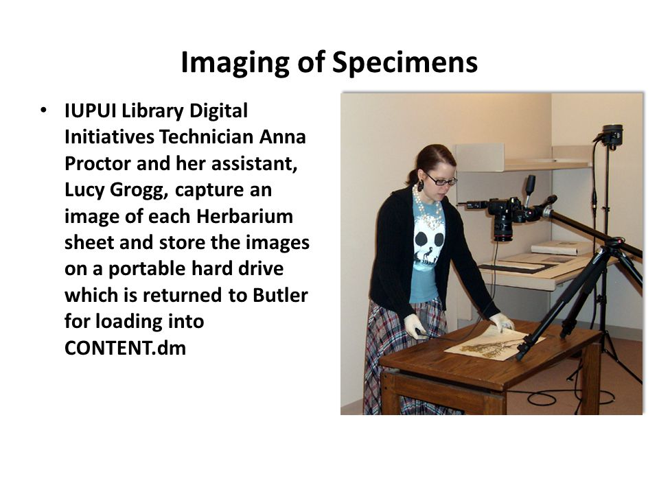 IUPUI Library Digital Initiatives Technician Anna Proctor and her assistant, Lucy Grogg, capture an image of each Herbarium sheet and store the images on a portable hard drive which is returned to Butler for loading into CONTENT.dm Imaging of Specimens