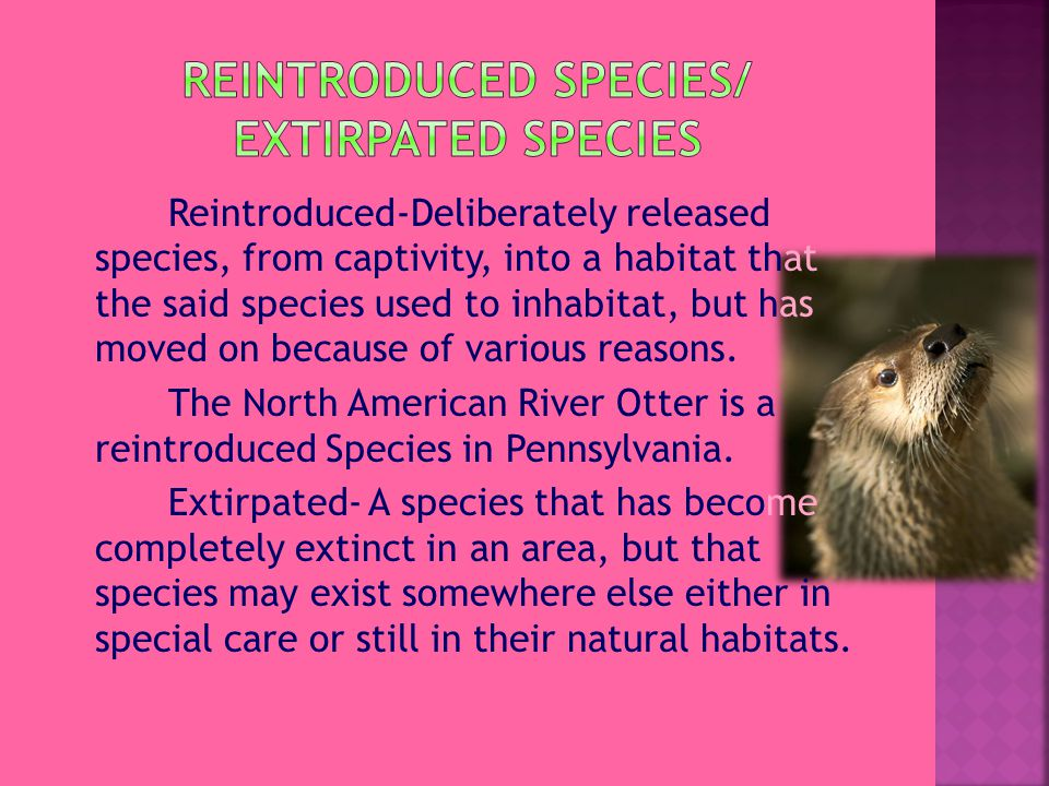 Reintroduced-Deliberately released species, from captivity, into a habitat that the said species used to inhabitat, but has moved on because of various reasons.