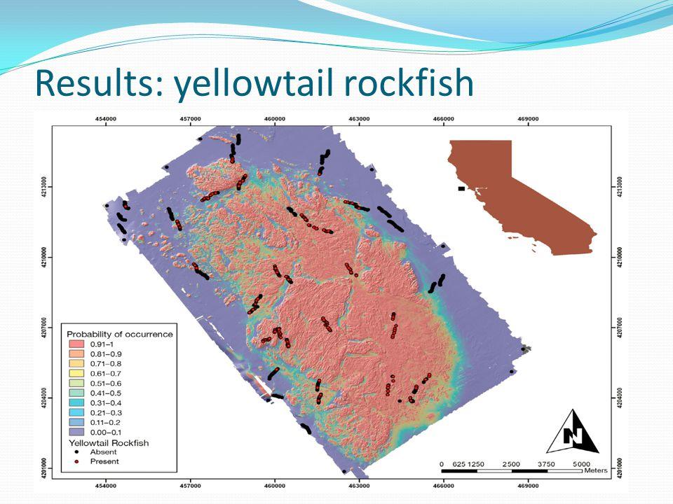 Results: yellowtail rockfish