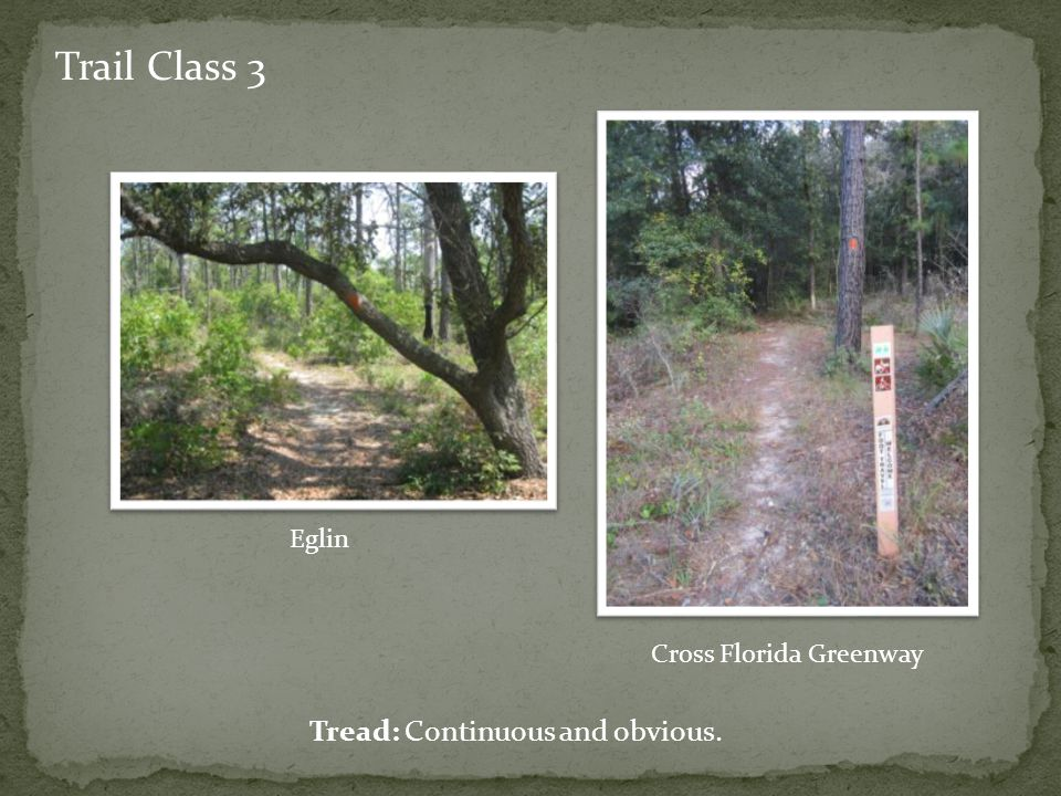 Trail Class 3 Tread: Continuous and obvious. Eglin Cross Florida Greenway