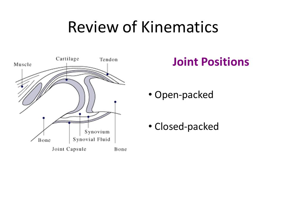 Review of Kinematics Joint Positions Open-packed Closed-packed