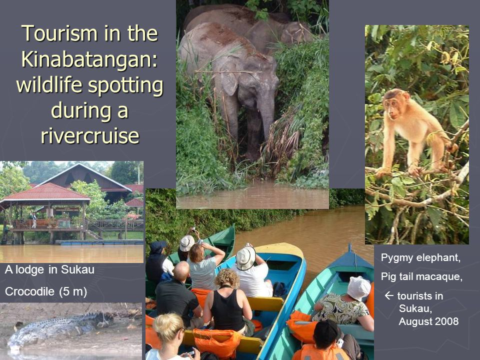 Tourism in the Kinabatangan: wildlife spotting during a rivercruise Pygmy elephant, Pig tail macaque,  tourists in Sukau, August 2008 A lodge in Sukau Crocodile (5 m)