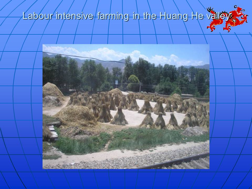Labour intensive farming in the Huang He valley