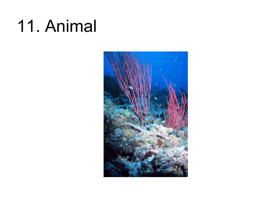11. Animal